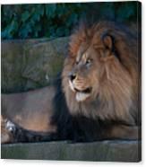 Lion 3 Canvas Print