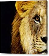 Lion Art - Face Off Canvas Print
