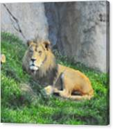 Lion At Leisure Canvas Print