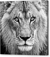 Lion Bw Canvas Print