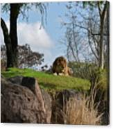 Lion Country Canvas Print