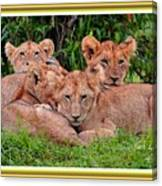 Lion Cubs. L A With Decorative Ornate Printed Frame. Canvas Print