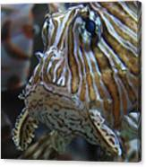 Lion Fish Profile Canvas Print