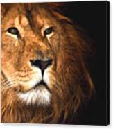 Lion Head Oil Painting Canvas Print