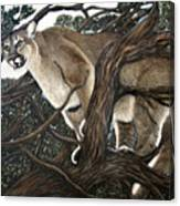 Lion In The Tree Canvas Print