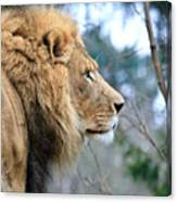 Lion In Thought Canvas Print