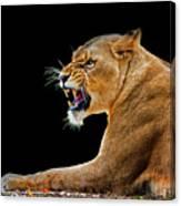 Lion On Black Canvas Print