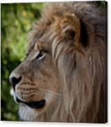 Lion Portrait Of A Leader Canvas Print