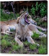 Lion Roar/2 Canvas Print