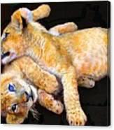 Lion Wrestling Canvas Print