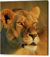 Lioness At Maasai Sunet Canvas Print