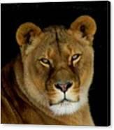 Lioness. No.2 Canvas Print