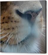 Lion's Breath Canvas Print
