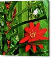 Lipstick Plant Flower Canvas Print
