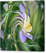 Liquid Columbine Canvas Print