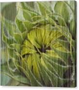 Liquid Sunflower Canvas Print