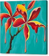 Liquidia Plumeria Canvas Print