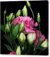 Lisianthus Flowers Canvas Print