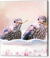 Little Bambinos Canvas Print