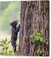 Little Bear Big Tree Canvas Print
