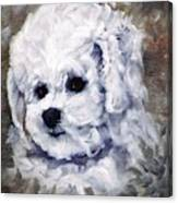 Little Bichon  Canvas Print