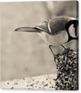 Little Bird Feeding Canvas Print