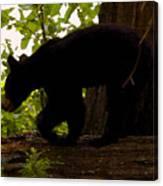 Little Black Bear Canvas Print