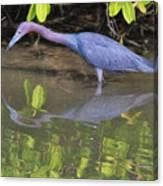 Little Blue Fishing Canvas Print