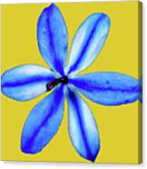 Little Blue Flower On A Yellow Background Canvas Print