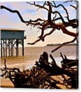 Little Blue Hunting Island State Park Beaufort Sc Canvas Print