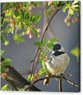 Little Chickadee In The Pink Canvas Print