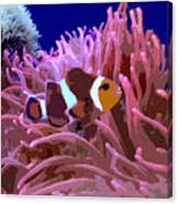 Little Clown Fish Canvas Print