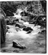 Little Creek 3 Bw Canvas Print
