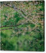 Little Diamonds In My Trees Canvas Print
