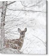 Little Doe In Snow Canvas Print