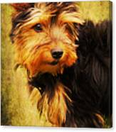 Little Dog II Canvas Print
