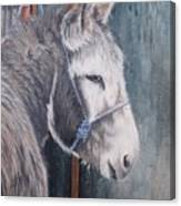 Little Donkey-glin Fair Canvas Print