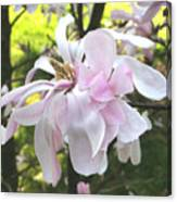 Little English Flower Canvas Print