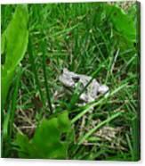 Little Frog Big Voice Canvas Print
