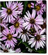 Little Green Bug Among The Flowers Canvas Print
