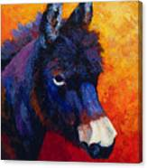Little Jack - Burro Canvas Print