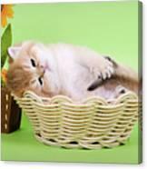 Little Kitten Canvas Print