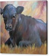 Little Moo  Angus Calf Painting Southwest Art Canvas Print