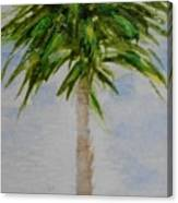 Little Palm Tree Canvas Print