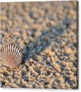 Little Seashell - Jersey Shore Canvas Print