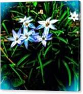 Little Star Wind Flowers Canvas Print
