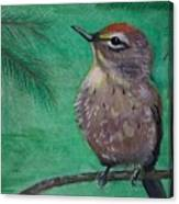Little Warbler Canvas Print