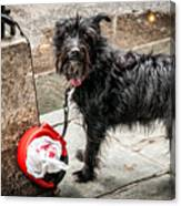 Little Wet Puppy In French Quarter Canvas Print