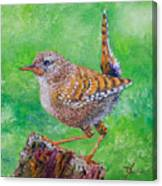Little Wren Canvas Print