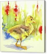 Little Yellow Duck Canvas Print